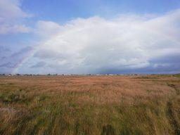 Bull Island Nature Reserve