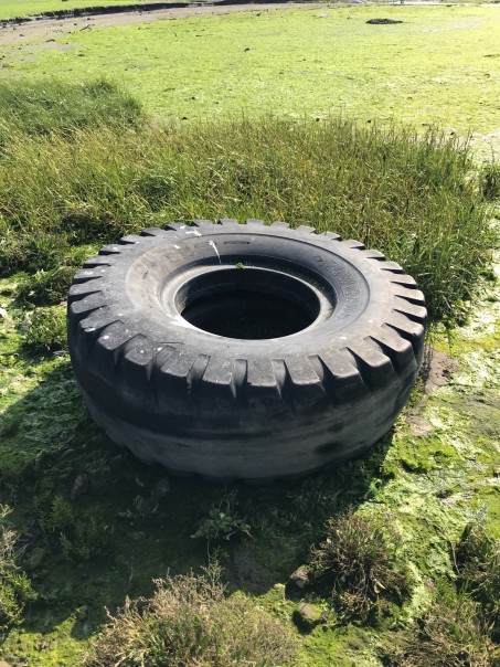Tyre in Dublin Bay Biosphere